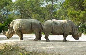 Ces deux rhinocéros, dos-à-dos et s'observant du coin de l'oeil, illustrent parfaitement notre abêtissement collectif, orchestré par le marketing numérique pour favoriser ses annonceurs